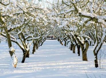 dragon-orchard-snow