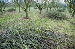 prunings2011